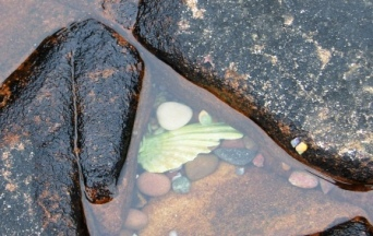 Rock Pool Angels Wing