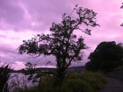 Tree at Dusk
